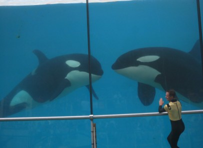 Marineland – un rai acvatic