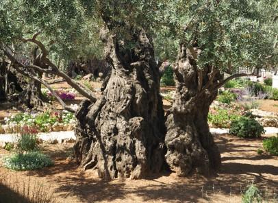 Vacanță în Thassos: Muzeul Măslinului